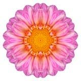 Roze Dahlia Flower Kaleidoscope Isolated op Wit stock foto
