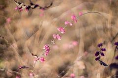 Roze de herfststruik Stock Foto's