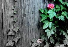 Roze de lentebloem Stock Fotografie