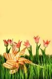 Roze de lentetulpen Stock Foto