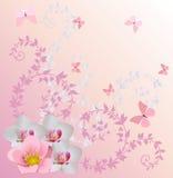 Roze de orchideedecoratie en vlinders van Ight stock illustratie
