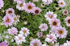 Roze decoratieve bloemen Stock Afbeeldingen