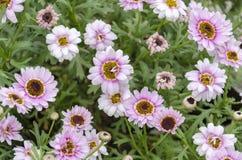 Roze decoratieve bloemen Royalty-vrije Stock Afbeelding