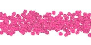 Roze die bloemblaadjes op witte achtergrond worden geïsoleerd 8 maart De dag van de valentijnskaart `s Romantisch kadermalplaatje royalty-vrije illustratie