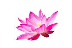 Roze die lotusbloem op witte achtergrond wordt geïsoleerd Royalty-vrije Stock Foto