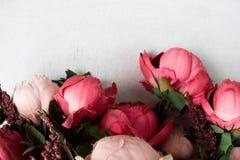Roze die pioenen op witte achtergrond worden geïsoleerd Stock Afbeelding