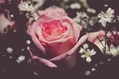 Roze die rozen met andere bloemen worden verfraaid Stock Afbeeldingen