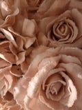 Roze die rozen met rijp worden behandeld stock foto