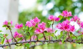 Roze document bloemen Royalty-vrije Stock Fotografie