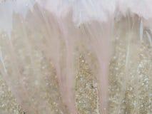 Roze dode die kwallen met bezinning over zand op het strand, als achtergrond en textuur wordt gebruikt Stock Foto's