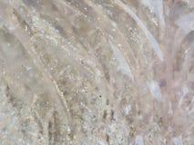Roze dode die kwallen met bezinning over zand op het strand, als achtergrond en textuur wordt gebruikt Stock Afbeeldingen