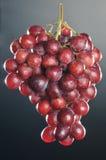 Roze druivencluster Royalty-vrije Stock Afbeelding