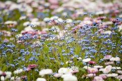 Roze en blauwe bloemen Royalty-vrije Stock Foto's