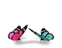 Roze en blauwe vlinders Stock Afbeelding