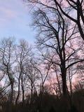 Roze en blauwe zonsondergang achter bomen Royalty-vrije Stock Foto