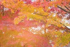 Roze en gele bladeren op boom Royalty-vrije Stock Foto