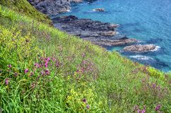 Roze en gele bloemen in Cornwall stock foto