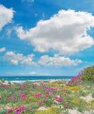 Roze en gele bloemen onder wolken Royalty-vrije Stock Foto's