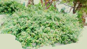 Roze en gele bloemen op een dichtbegroeide installatie stock fotografie