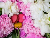 Roze en gele makarons op pioenachtergrond Roze en witte pioen en makarons royalty-vrije stock afbeeldingen