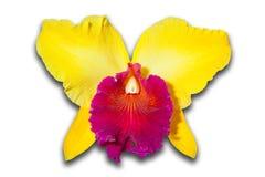 Roze en Gele Orchidee Stock Foto