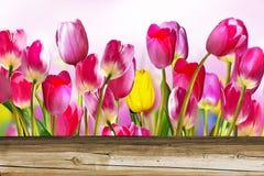 Roze en gele tulpen Royalty-vrije Stock Foto's
