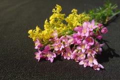 Roze en gele wilde bloemen royalty-vrije stock foto's