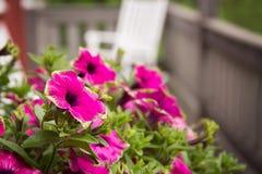 Roze en groene bloemen Stock Afbeelding