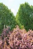 Roze en groene bomen Stock Afbeeldingen