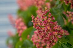 Roze en Oranje Bloemen Selectieve Nadruk Stock Afbeeldingen
