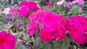 Roze en Rode bloemen die aardbeeld verbazen royalty-vrije stock foto