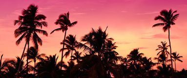 Roze en rode zonsondergang over overzees strand met palmen Stock Afbeeldingen
