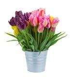 Roze en violette tulpenbloemen in metaalpot Royalty-vrije Stock Foto