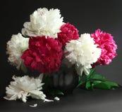 Roze en wit pioenenstilleven Stock Foto's