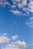 Roze en Witte Ballons met Prentbriefkaaren die in Hemel vliegen Royalty-vrije Stock Fotografie