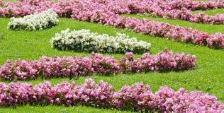 Roze en witte begonia's Royalty-vrije Stock Foto's