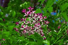 Roze en witte bloemen met groene bladeren royalty-vrije stock afbeeldingen