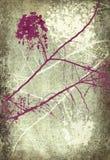 Roze en witte de bloesemtakken van Grunge Stock Afbeeldingen