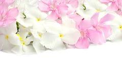 Roze en witte die de lentebloemen op witte achtergrond worden geïsoleerd stock fotografie