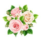 Roze en witte die rozen op wit worden geïsoleerd Vector illustratie stock foto