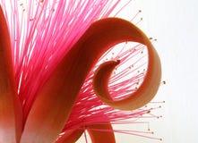 Roze exotische bloem Stock Foto's