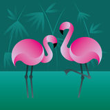 Roze Flamingo Stock Fotografie