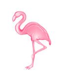 Roze Flamingo Royalty-vrije Stock Afbeelding