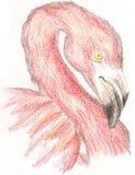 Roze Flamingo Stock Afbeeldingen