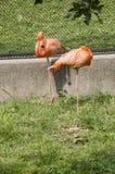 Roze Flamingo's stock afbeelding