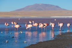 Roze flamingo's bij Stock Fotografie