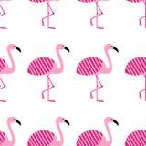 Roze flamingo's naadloos patroon op witte achtergrond Bevindende houding Het park van de dierentuinvogel vectorontwerpillustratie royalty-vrije illustratie