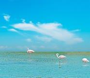 Roze flamingo's onder een blauwe hemel royalty-vrije stock fotografie