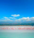 Roze flamingo'stroep royalty-vrije stock foto's