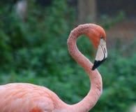 Roze Flamingo tegen Zachte Groene Achtergrondafbeelding stock foto